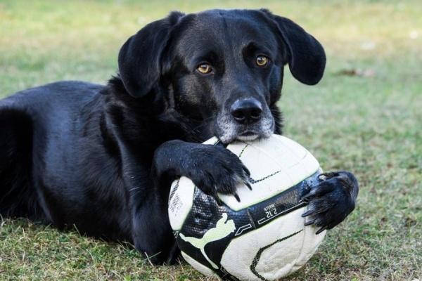 hond voetbal